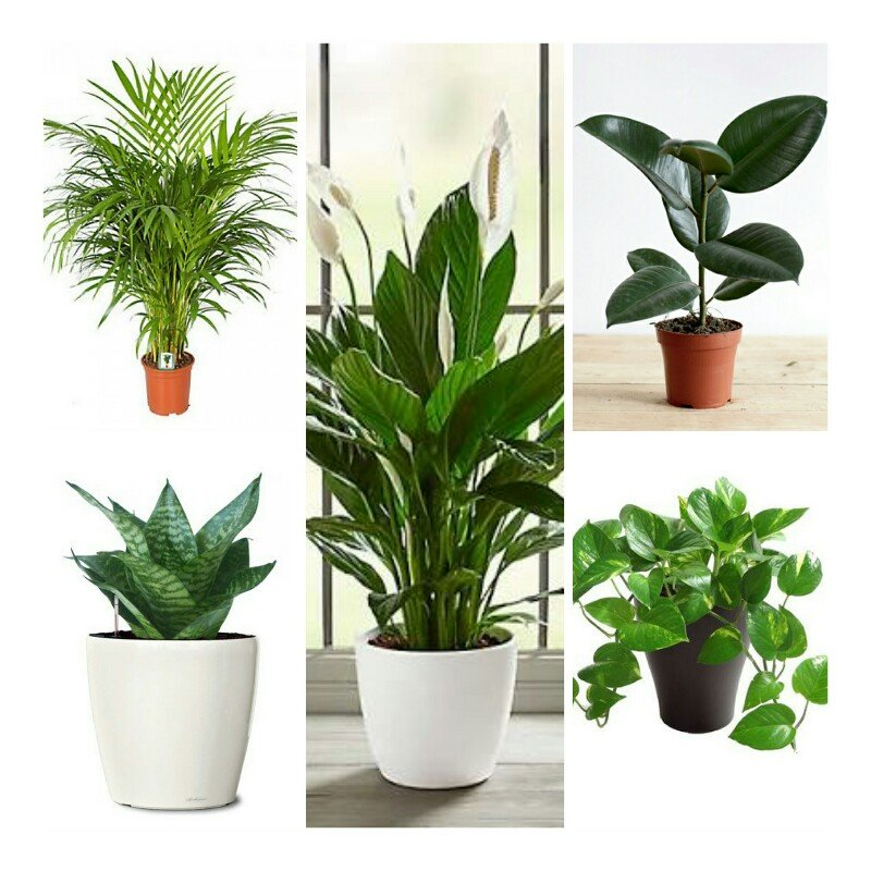Air purifying plants: 5 best air cleaning plants in 2019